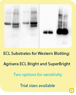 Ecl  detection reagents