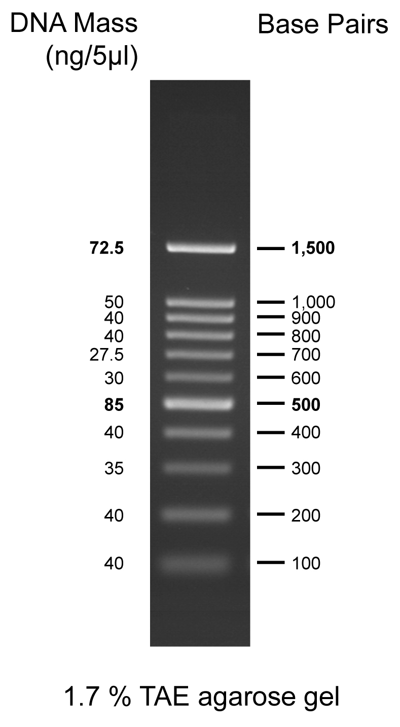 100bp DNA Marker