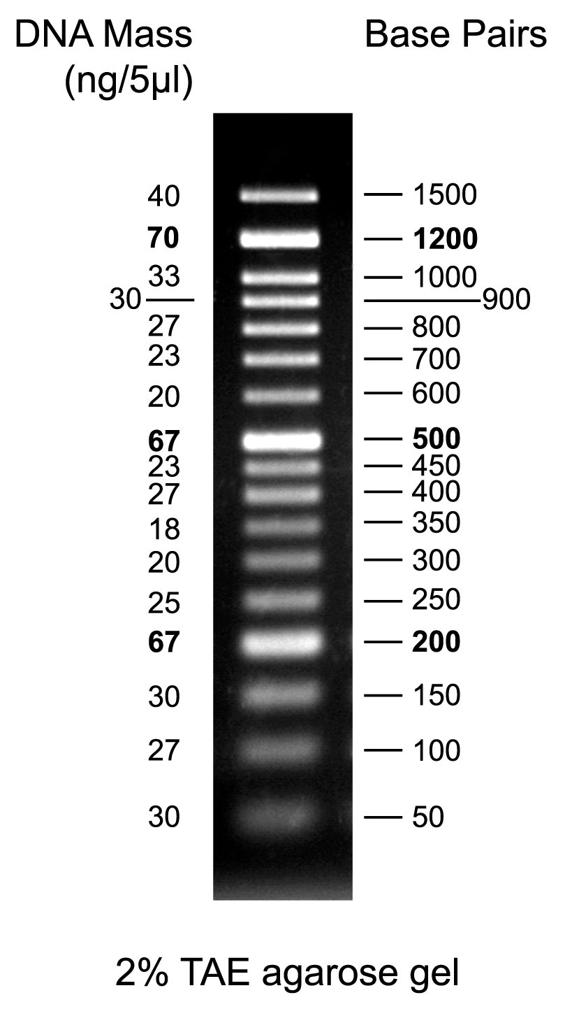 50bp DNA Marker